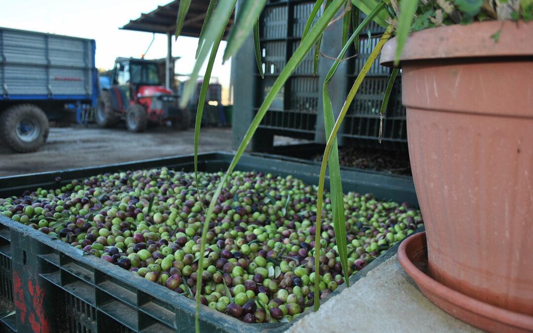 Le-nostre-olive