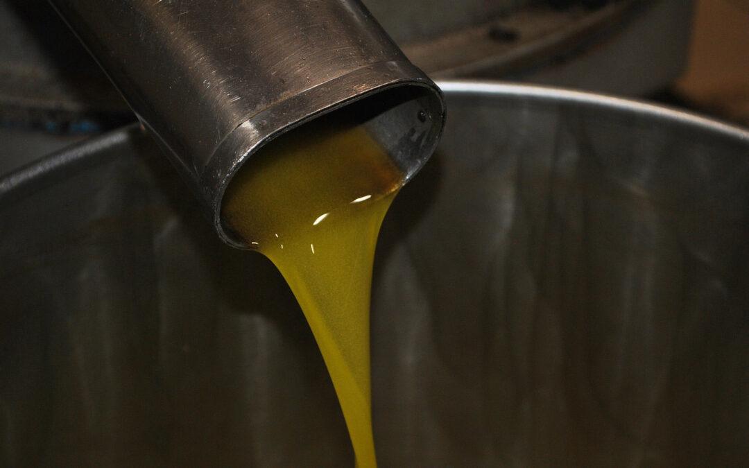 Olio-campagna-olearia-2019-2020