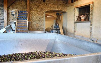 Campagna olearia in corso: Oleificio Fragale dal 1860